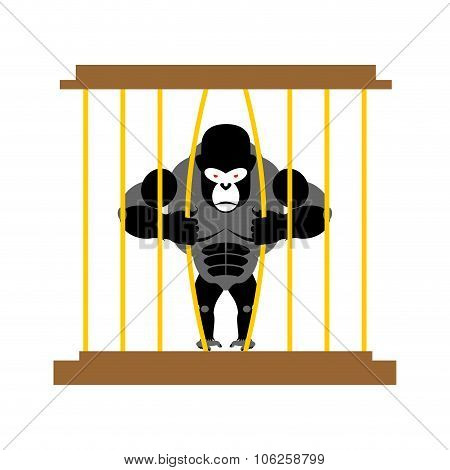 Gorilla In Cage In  Zoo. Strong Scary Wild Animal In Captivity. Big Monkey Sits Behind Bars. Animal