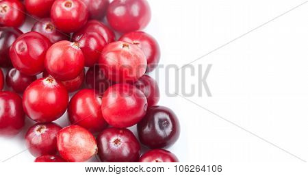 Natural, organic cranberry. close-up photo.