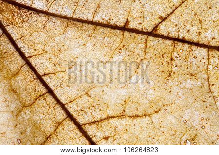 Abstract pattern of colorful brown autumn leaf
