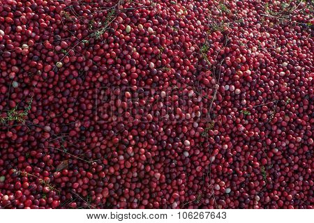 Mound of cranberries