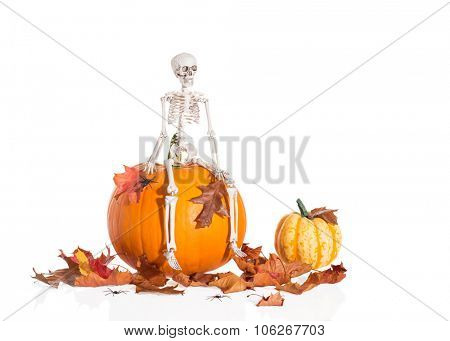Skeleton sitting on pumpkin amongst autumn leaves for Halloween
