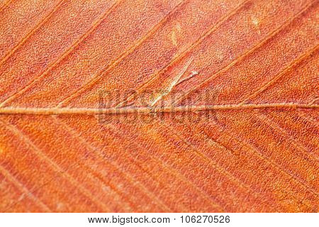 Abstract pattern of autumn leaves. close-up