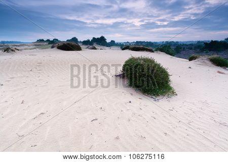 Sand Dune In Dusk
