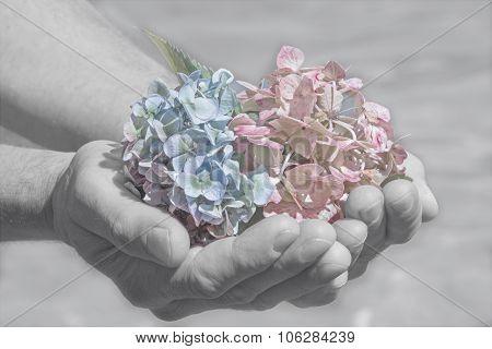 Hydrangea Blossoms In A Mans Hand, Farewell Scene