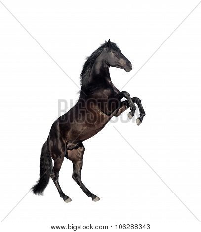 Horse Isolate