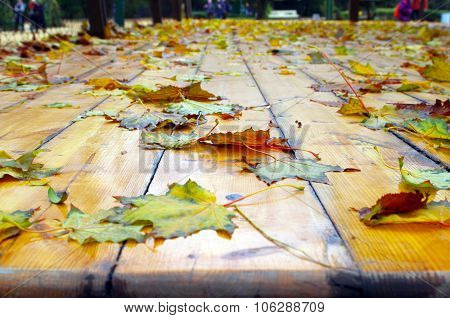Selective Focus On Fallen Autumn Maple Leaves