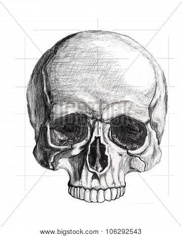 Draft of the skull
