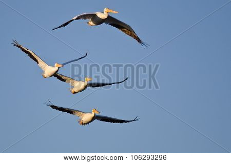 Four American White Pelicans Flying In A Blue Sky