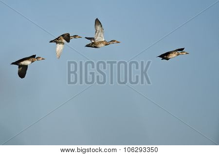 Small Flock Of Ducks Flying In A Blue Sky