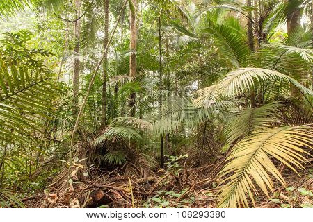 Tropical rainforest wide angle shot