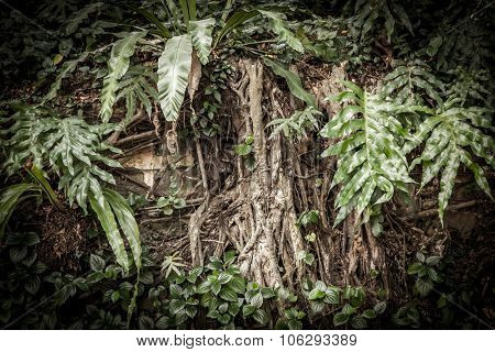 Tropical rainforest background with roots and leaves