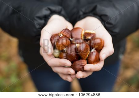 A Teenage Girl Holding A Handful Of Sweet Chestnuts
