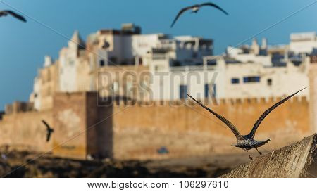 Selective Focus Shot Of A Gull In Front Of Essaouiras Medina In