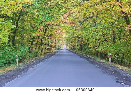 The road autumn.
