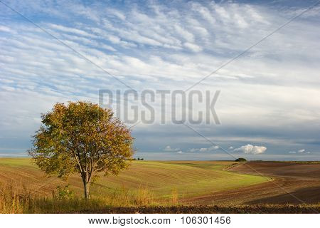 Lone Tree And Clouds