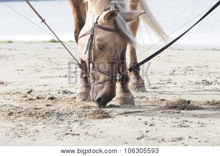 Horse on a beach sniffing sand