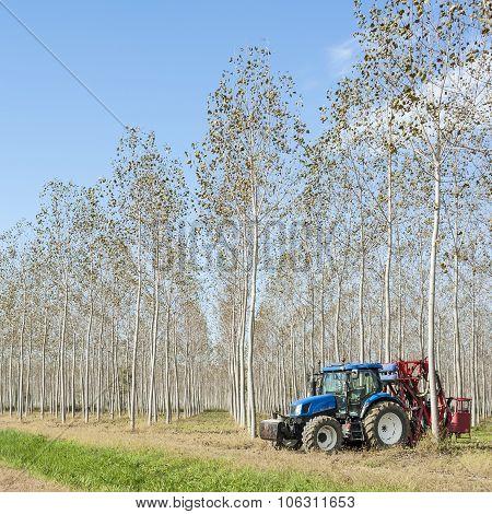 Poplar Grove And Tractor