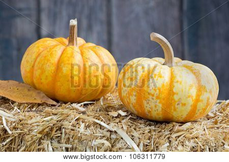 Two Autumn Squash