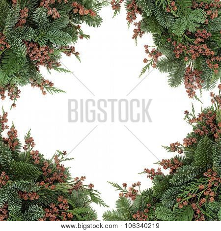 Winter background border of blue spruce and cedar cypress leyland leaf sprigs with pine cones over white.