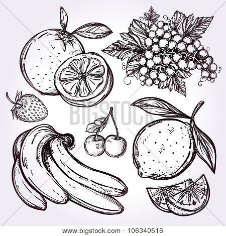 Various fruits set vintage linear style.