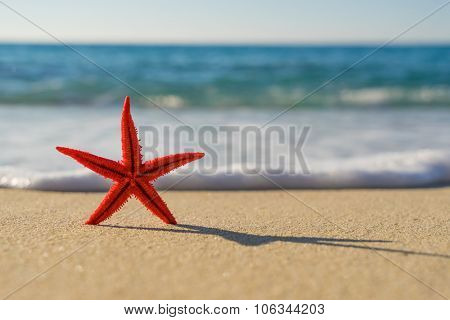 Red Starfish on the beach on a sunny day