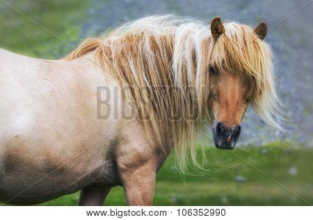 Single Horse On Meadow