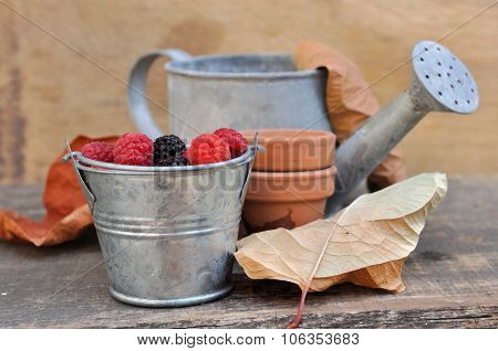 Raspberries On Automnal Background