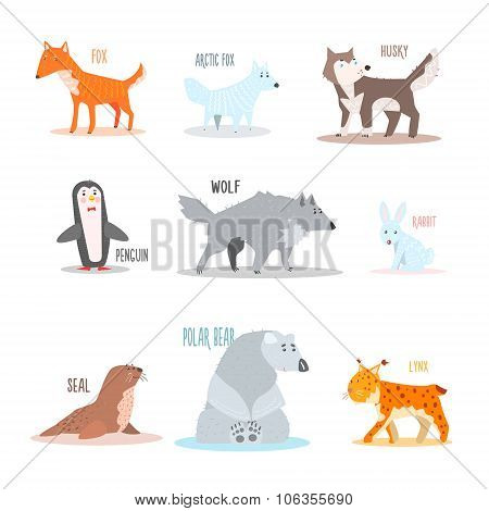 Arctic and Antarctic Animals, Penguin. Vector Illustration