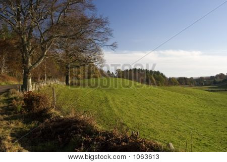 Green Paddock Walk