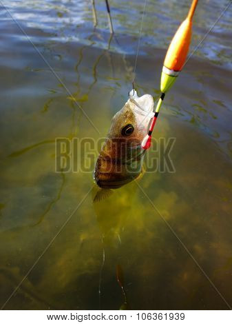 Summer Perch Fishing Bait