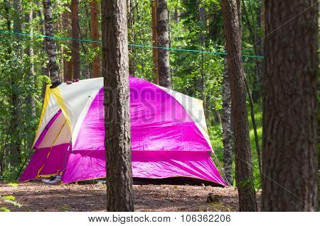 Camping Outdoor With  Tent In Woods In Summer