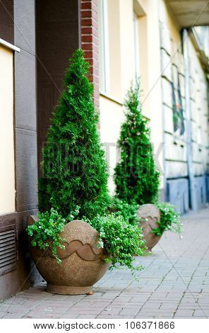 Trees in a flowerpot on brick wall background