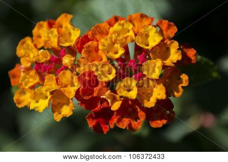 flor compuesta