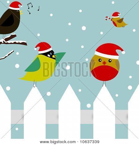 Aves de Natal