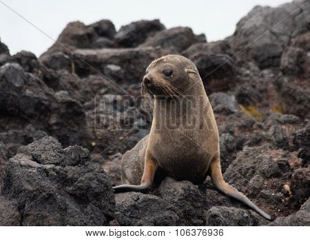 Seal pup on the rocks