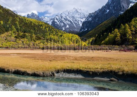 Brook And Pine Forest In Autumn Season