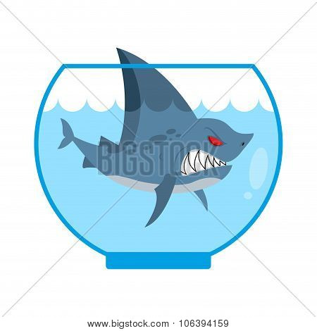 Shark In Aquarium. Angry Marine Predator With Large Teeth. Home Marine Pet. Tiny Water Animal.