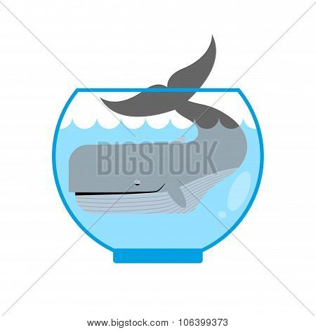 Whale In  Aquarium. Large Sea Animal Is Not Put Into Aquarium. Tail Is Sticking Out Of  Water. Mini