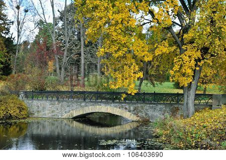 Autumn maple, arched bridge.