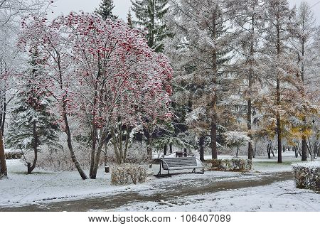 First Snow In A City Park