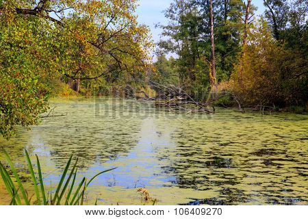 landscape with swamp in autumn forest