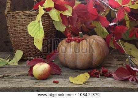 Pumpkin, Wattled Basket Autumn Leaves