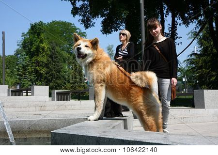 Akita And Girl