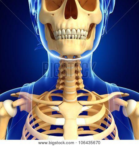 Neck Skeleton Artwork