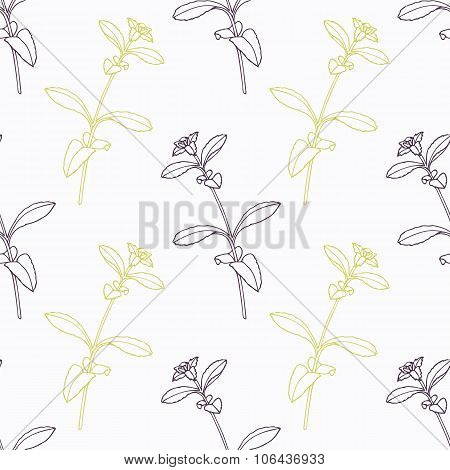 Hand drawn stevia branch stylized black and green seamless pattern