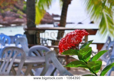 Ixora By The Beach