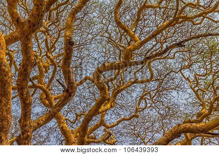 Treetop detail with lot of branches