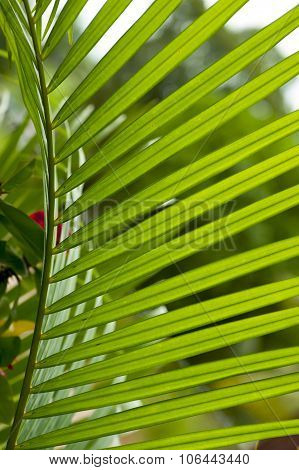 Fern leaves with backlite sunlight
