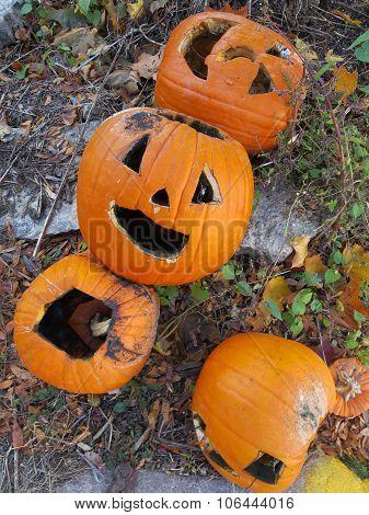 Post Halloween Pumpkin Jack O Lanterns