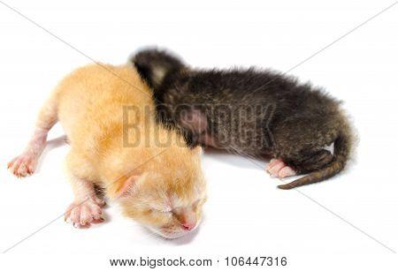 Two Newborn Kittens